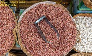 فروش بادام زمینی ارزان