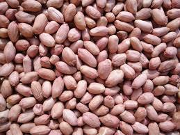 خرید بادام زمینی ایران