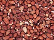 تولید بادام زمینی بو داده