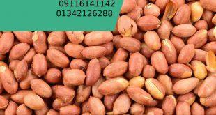 خرید بادام زمینی ترکیه