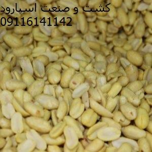 فروش عمده بادام زمینی چینی