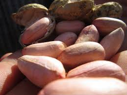 خرید بهترین بادام زمینی های ایرانی با قیمت های بسیار مناسب